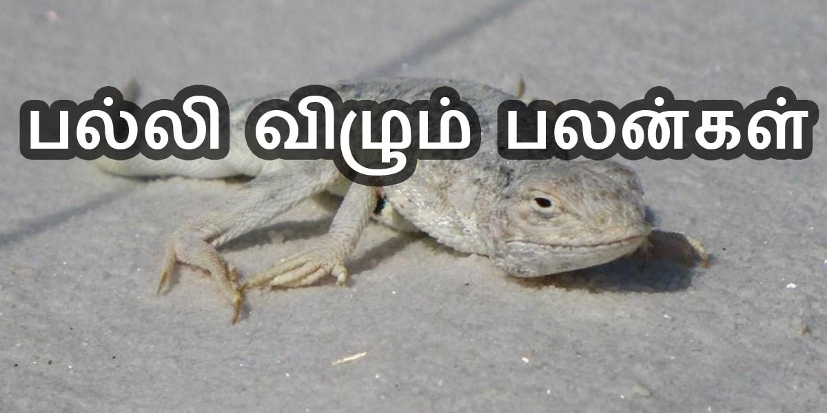 பல்லி விழும் பலன் - Palli Vilum Palan